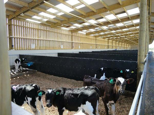 Featured Project Insulated Calf Shed