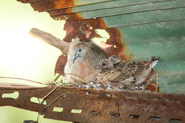 How to stop birds getting in the rafters of your shed